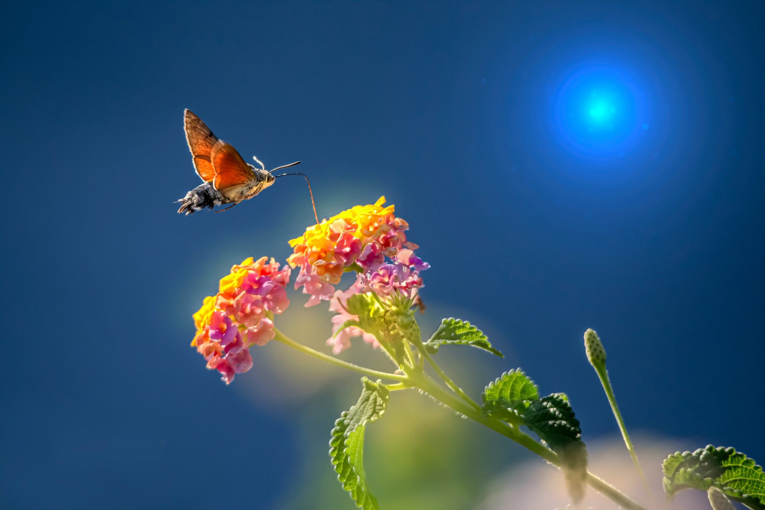 The Butterfly Effect: Monitoring and protecting local butterflies and moths